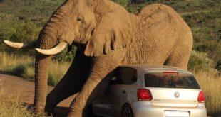 Η Ζιμπάμπουε γέμισε από… ελέφαντες και δεν ξέρει τι να τους κάνει
