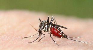 Ιός Δυτικού Νείλου: Οι περιοχές με τα περισσότερα μολυσμένα κουνούπια