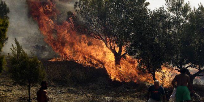 Πυρκαγιά σε δασική έκταση στον δήμο Αρχαίας Ολυμπίας