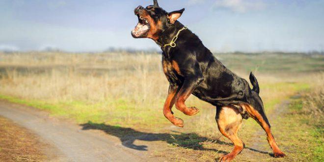Περπατούσε στο Κουμ Καπί στα Χανιά και δέχτηκε επίθεση από σκύλο