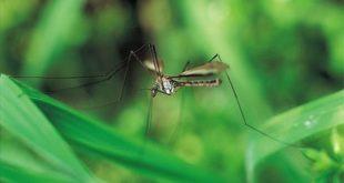 Θύμα του ιού του Δυτικού Νείλου 83χρονος στις Σέρρες