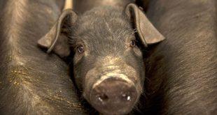 Σόγια και χοιρινό εξαιρούνται από τους δασμούς σε αμερικανικά προϊόντα