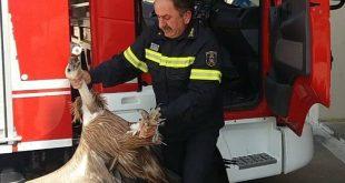 Γύπας έπεσε πάνω σε λεωφορείο στην εθνική οδό Χανίων-Ρεθύμνου