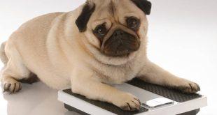 Το βάρος του ιδιοκτήτη επηρεάζει το... βάρος του σκύλου του