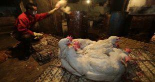Βουλγαρία: Εντατικοί έλεγχοι για την γρίπη των πτηνών