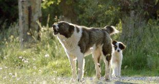 Διόνυσος: Αγέλη σκυλιών επιτέθηκε σε δυο νοσηλευτές