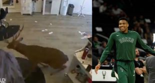 Η εισβολή του ελαφιού στο κομμωτήριο έγινε επικό promo των Μπακς για το ΝΒΑ!