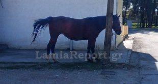 Άλογα τριγύριζαν μόνα τους στους δρόμους της Λαμίας