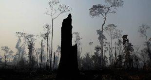 Προφυλακίστηκαν τέσσερις εθελοντές πυροσβέστες για τις φωτιές στον Αμαζόνιο