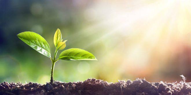 Το «τεχνητό φύλλο» που ρίχνεται στη μάχη κατά της κλιματικής αλλαγής
