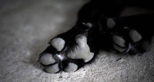 Στυλίδα: Αθλητής βρήκε σκύλο κρεμασμένο σε κιόσκι
