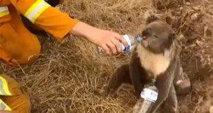 Οι άνθρωποι που βοήθησαν πάνω από 90.000 ζώα στη φλεγόμενη Αυστραλία