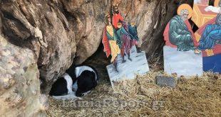Μακρυνίτσα: Η φάτνη έγινε σπίτι για τον αδέσποτο σκυλάκο