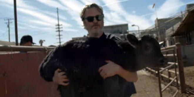 Joaquin Phoenix: Μετά τα Όσκαρ, σώζει αγελάδες από σφαγείο