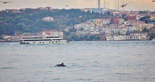 Κωνσταντινούπολη - Κορονοϊός: Τα δελφίνια χαίρονται έναν Βόσπορο γαλήνιο χάρη στο lockdown