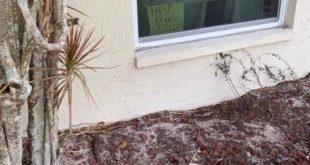 Δεκάχρονη είχε βάλει στο παράθυρο σημείωμα καλώντας σε βοήθεια για τον πιο απίθανο λόγο- Έσπευσε στο σπίτι η Αστυνομία