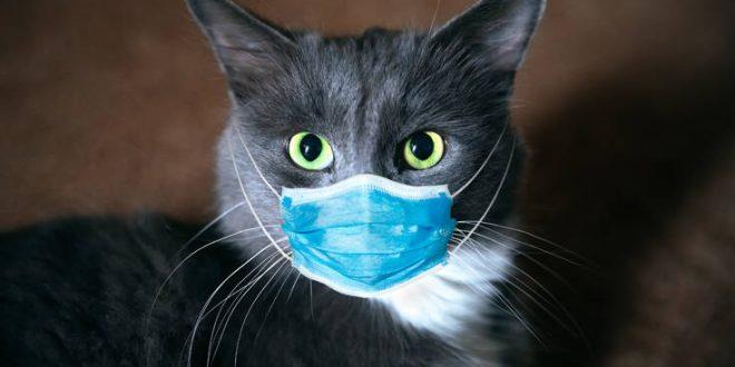 Μπορούν οι γάτες να κολλήσουν κορονοϊό τον άνθρωπο;