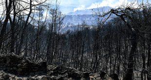 Σε ύφεση η πυρκαγιά στις Κεχριές Κορινθίας