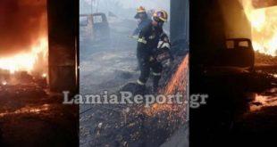 Ολονύχτια μάχη με τις φλόγες στη δυτική Φθιώτιδα - Κινδύνευσαν πυροσβέστες