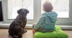 Τα οφέλη για τα παιδιά που μεγαλώνουν με σκύλους