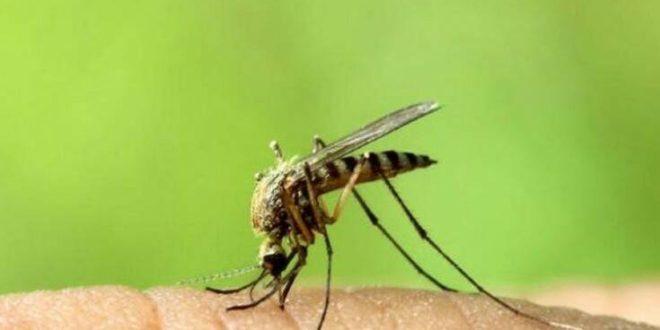 «Ο καταρροϊκός πυρετός δεν μεταδίδεται στον άνθρωπο»
