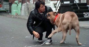 Η συγκινητική ιστορία του Σιλβέστερ Σταλόνε και του σκύλου του