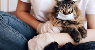 Καμπανάκι από τους επιστήμονες: Οι γάτες μεταδίδουν μεταξύ τους τον κορονοϊό ενώ οι σκύλοι όχι