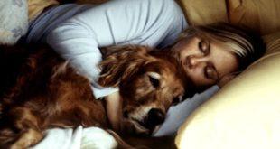 Οι άνθρωποι μεταδίδουν την ασθένεια στις γάτες και τους σκύλους τους