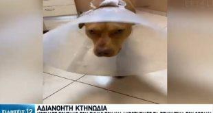Συγκινεί η εικόνα του σκύλου που έζησε τη φρίκη στα Χανιά - Πατέρας τριών παιδιών ο δράστης, περιμένει και δίδυμα