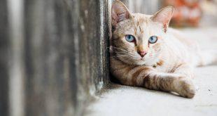 Meow Talk: Η εφαρμογή που βοηθά τους φίλους της γάτας να καταλάβουν τι... λέει
