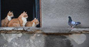 Meow Talk: Η εφαρμογή που μεταφράζει τα νιαουρίσματα των γατών με τη βοήθεια της τεχνητής νοημοσύνης