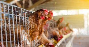 Συναγερμός στη Νορβηγία: Πρώτο κρούσμα της γρίπης των πτηνών H5N8