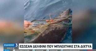 Ηράκλειο: Έσωσαν δελφίνι που είχε εγκλωβιστεί σε ξεχασμένα δίχτυα
