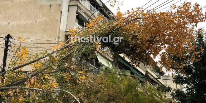 Θεσσαλονίκη: Πεσμένα δέντρα και πλημμυρισμένοι δρόμοι - Δείτε τις εικόνες