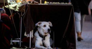Δύο πρώτα κρούσματα κορονοϊού σε ζώα εντοπίστηκαν στη Γερμανία - Καμία ανησυχία για τους ανθρώπους